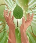 Healing Codes image